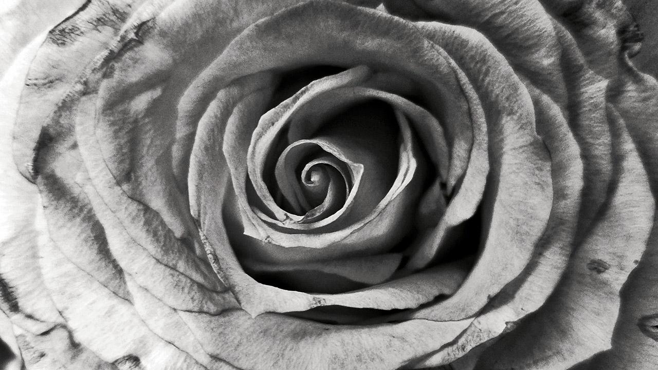 Natur im Detail | © Mio Schweiger Fotografie