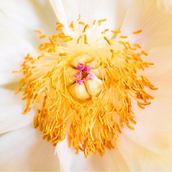 Blüte 02 | © Mio Schweiger Fotografie